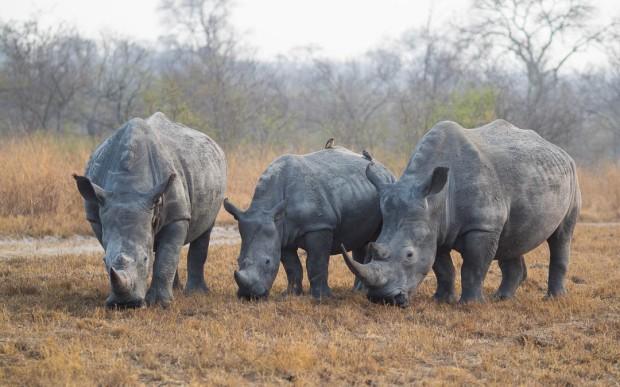 safari-roads-rhino