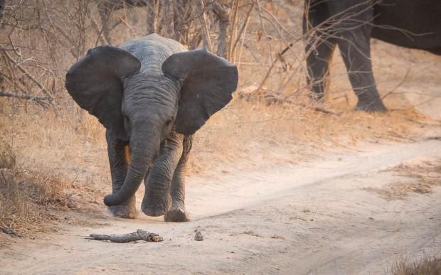 safari-roads-storming-liittle-elefant