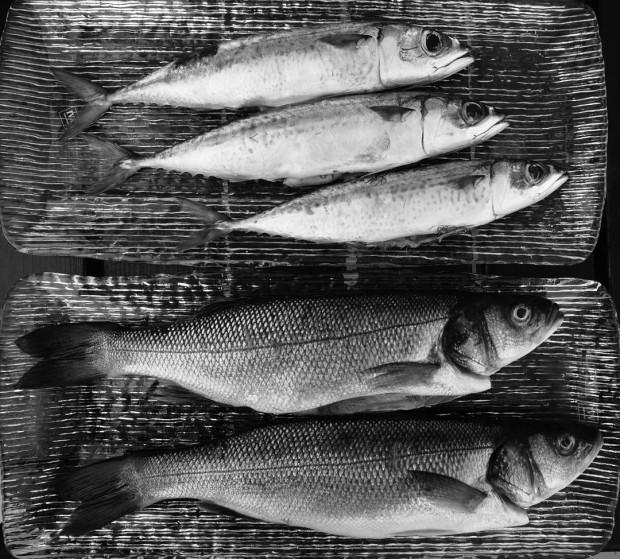 Monochrome Fish Still Life