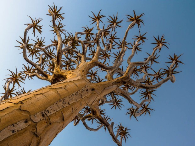 Quivertree Forest 02