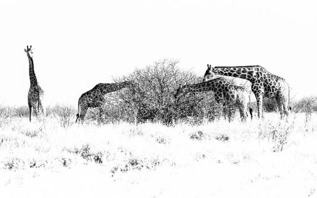 Etosha Animals HeyKey Panorama 01