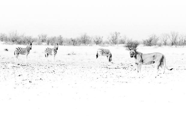 Etosha Animals HeyKey Panorama 02