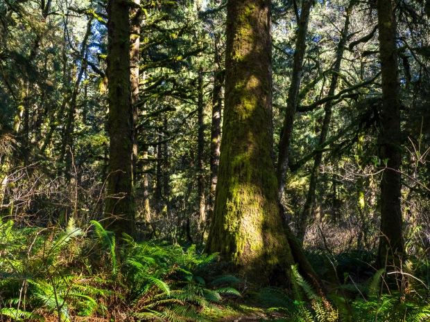 Cascade Head Trail 11