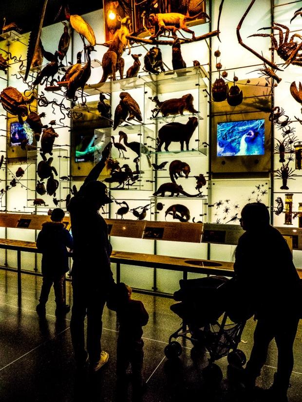 AMNH NYC 05