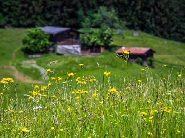 Alpine Dream |Switzerland |2018